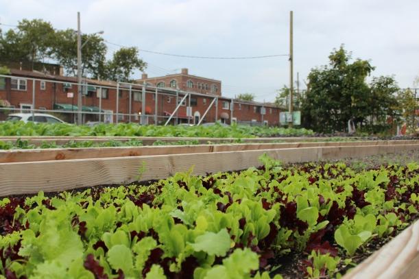 project-eats-brownsville-farm-1444839604.JPG